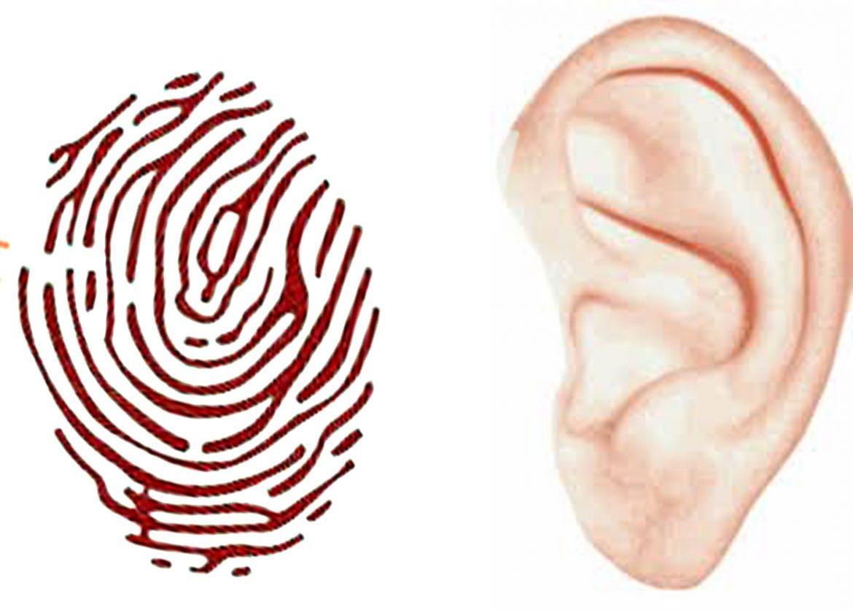 Kulak izleri parmak izlerinin yerini mi alacak?