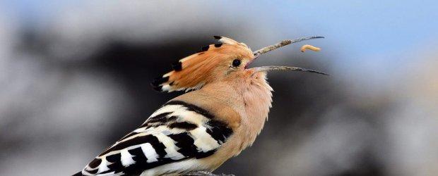 Hz. Süleyman ve Hüdhüd kuşunun hikayesi