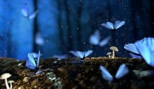 Srebrenitsa ölüm çiçekleri ve mavi kelebekler