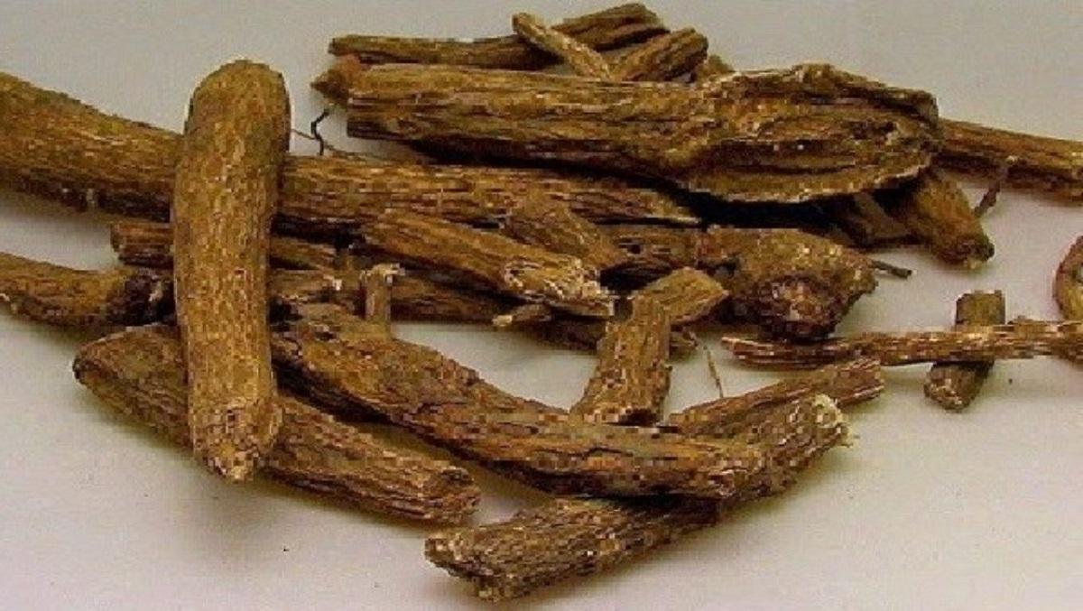 Udi hindi bitkisinin faydaları neler? Udi hindi bitkisi zararları var mı?