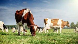 2020-2022 dönemi hayvancılık yatırım desteği belirlendi
