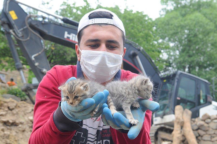 2 yavru kedi