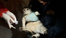 İşte İzmir depreminde enkaz altından kurtarılan hayvanlar